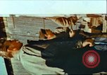 Image of United States soldiers Germany, 1945, second 8 stock footage video 65675063584