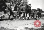 Image of German soldiers Poland, 1939, second 36 stock footage video 65675063667