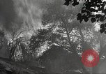 Image of forest fire California United States USA, 1934, second 45 stock footage video 65675063715