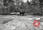 Image of small game hunting United States USA, 1920, second 15 stock footage video 65675063728