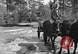 Image of small game hunting United States USA, 1920, second 37 stock footage video 65675063728