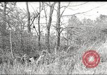 Image of small game hunting United States USA, 1920, second 57 stock footage video 65675063728