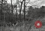Image of small game hunting United States USA, 1920, second 60 stock footage video 65675063728