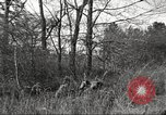 Image of small game hunting United States USA, 1920, second 62 stock footage video 65675063728