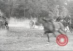 Image of US Army cavalry training Nebraska United States USA, 1914, second 61 stock footage video 65675063750