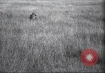 Image of Akeley-Eastman-Pomeroy expedition Kenya Africa, 1927, second 16 stock footage video 65675063758