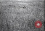Image of Akeley-Eastman-Pomeroy expedition Kenya Africa, 1927, second 19 stock footage video 65675063758