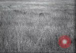 Image of Akeley-Eastman-Pomeroy expedition Kenya Africa, 1927, second 20 stock footage video 65675063758