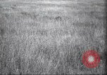 Image of Akeley-Eastman-Pomeroy expedition Kenya Africa, 1927, second 21 stock footage video 65675063758