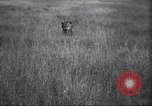 Image of Akeley-Eastman-Pomeroy expedition Kenya Africa, 1927, second 24 stock footage video 65675063758
