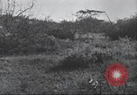 Image of Akeley-Eastman-Pomeroy expedition Kenya Africa, 1927, second 41 stock footage video 65675063758