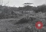 Image of Akeley-Eastman-Pomeroy expedition Kenya Africa, 1927, second 43 stock footage video 65675063758