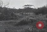 Image of Akeley-Eastman-Pomeroy expedition Kenya Africa, 1927, second 45 stock footage video 65675063758