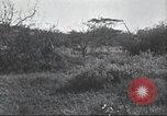 Image of Akeley-Eastman-Pomeroy expedition Kenya Africa, 1927, second 46 stock footage video 65675063758
