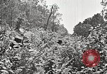 Image of Clyde Barrow and Bonnie Parker Bienville Parish Louisiana USA, 1934, second 58 stock footage video 65675063768