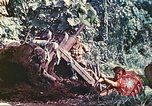 Image of US 5th Marines use winch to pull armored vehicle uphill Talasea New Britain Papua New Guinea, 1944, second 53 stock footage video 65675063814
