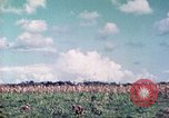 Image of 4th Tank Battalion Tinian Island Mariana Islands, 1944, second 12 stock footage video 65675063857