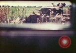 Image of 4th Tank Battalion Tinian Island Mariana Islands, 1944, second 32 stock footage video 65675063858