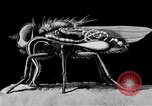 Image of fly-disease carrier United States USA, 1924, second 57 stock footage video 65675070773