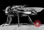 Image of fly-disease carrier United States USA, 1924, second 61 stock footage video 65675070773