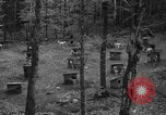 Image of sled dogs Wonalancet New Hampshire USA, 1939, second 4 stock footage video 65675070946