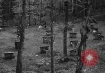 Image of sled dogs Wonalancet New Hampshire USA, 1939, second 6 stock footage video 65675070946