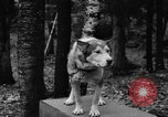 Image of sled dogs Wonalancet New Hampshire USA, 1939, second 8 stock footage video 65675070946