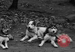 Image of sled dogs Wonalancet New Hampshire USA, 1939, second 11 stock footage video 65675070946