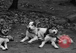Image of sled dogs Wonalancet New Hampshire USA, 1939, second 12 stock footage video 65675070946