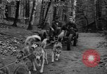 Image of sled dogs Wonalancet New Hampshire USA, 1939, second 17 stock footage video 65675070946