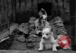 Image of sled dogs Wonalancet New Hampshire USA, 1939, second 21 stock footage video 65675070946