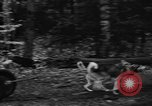 Image of sled dogs Wonalancet New Hampshire USA, 1939, second 33 stock footage video 65675070946
