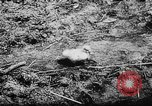 Image of German and Hungarian troops joining forces Ukraine, 1941, second 29 stock footage video 65675071183