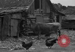 Image of African American farmers United States USA, 1931, second 2 stock footage video 65675071227