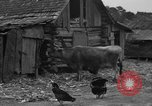 Image of African American farmers United States USA, 1931, second 3 stock footage video 65675071227