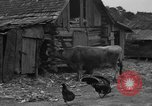 Image of African American farmers United States USA, 1931, second 7 stock footage video 65675071227
