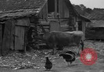 Image of African American farmers United States USA, 1931, second 8 stock footage video 65675071227