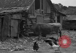 Image of African American farmers United States USA, 1931, second 10 stock footage video 65675071227