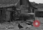 Image of African American farmers United States USA, 1931, second 12 stock footage video 65675071227