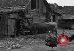 Image of African American farmers United States USA, 1931, second 28 stock footage video 65675071227