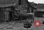 Image of African American farmers United States USA, 1931, second 29 stock footage video 65675071227