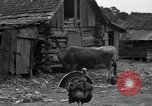 Image of African American farmers United States USA, 1931, second 31 stock footage video 65675071227