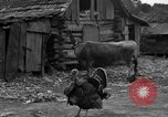 Image of African American farmers United States USA, 1931, second 34 stock footage video 65675071227