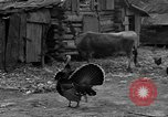 Image of African American farmers United States USA, 1931, second 38 stock footage video 65675071227