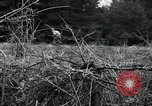 Image of United States 1st Infantry Division Belgium, 1944, second 45 stock footage video 65675071308