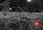 Image of United States 1st Infantry Division Belgium, 1944, second 47 stock footage video 65675071308
