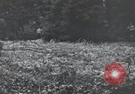 Image of United States 1st Infantry Division Belgium, 1944, second 62 stock footage video 65675071308