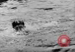 Image of swimming competition Germany, 1943, second 36 stock footage video 65675071389