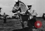 Image of agricultural show Bellahoj Denmark, 1943, second 38 stock footage video 65675071390