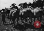 Image of agricultural show Bellahoj Denmark, 1943, second 44 stock footage video 65675071390